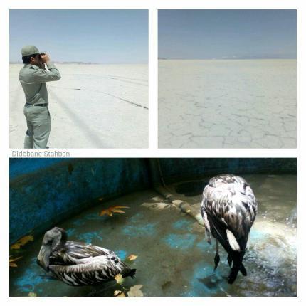 فلامینگوهای دریاچه بختگان فارس